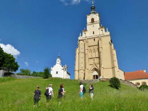 Kräuter Wanderung am Pöllauberg